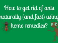 Get rid of ants naturally using these home remedies
