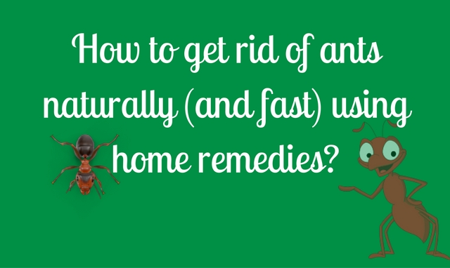 How To Get Rid Of Household Ants Naturally
