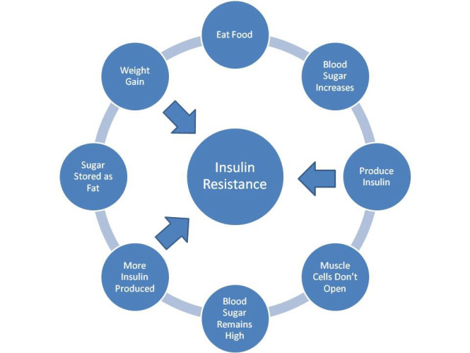 Insulin resistance vicious cycle