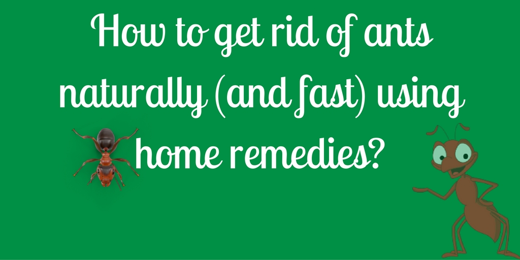 How To Get Rid Of Ants Naturally (and Fast) Using Home