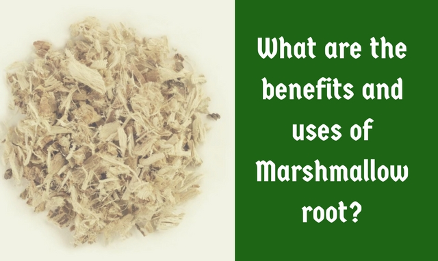 The Benefits and Uses of Marshmallow Root