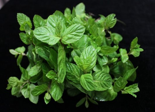How to use Mint Leaves to improve your skin?